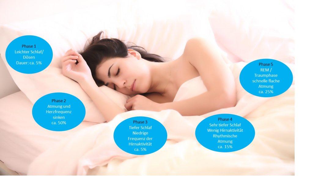 5 Schlafphasen