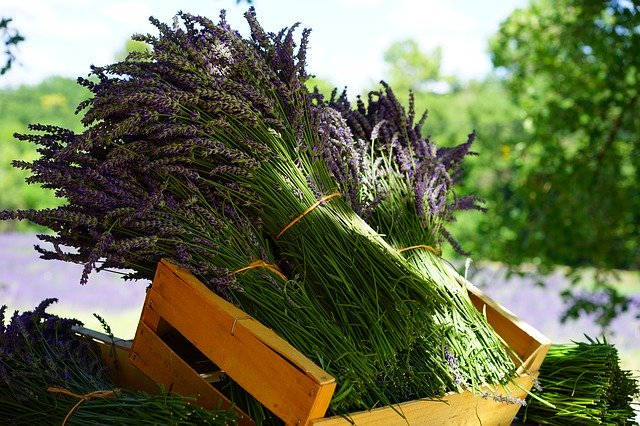 Aromatherapie mit Lavendel Duft