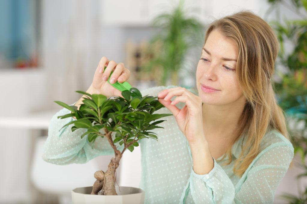 Frau schneidet ihren Bonsai